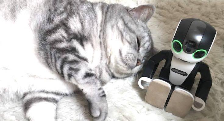 cat with robohon