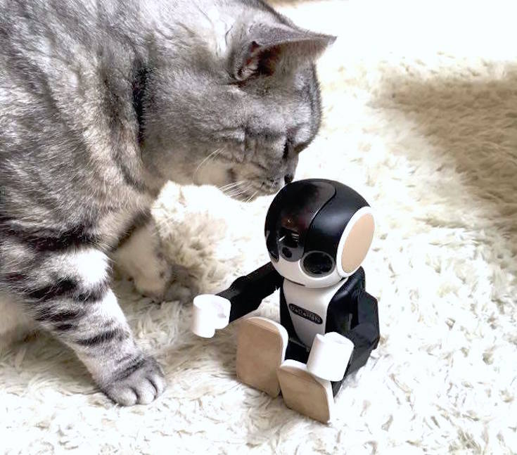 cat with robohon01