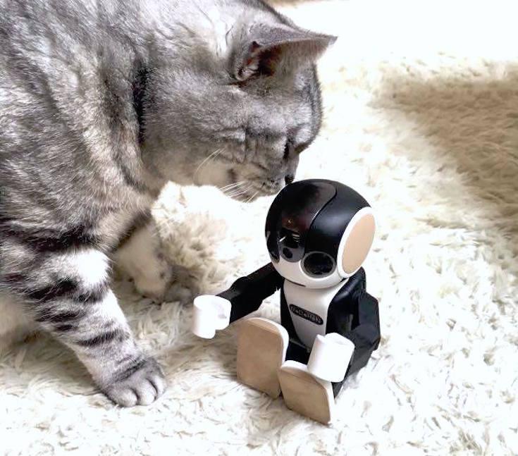 cat with robohon01