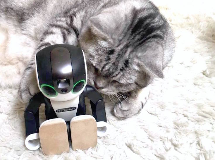 cat with robohon02