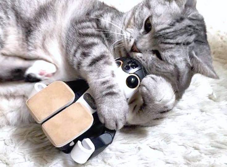 cat with robohon03