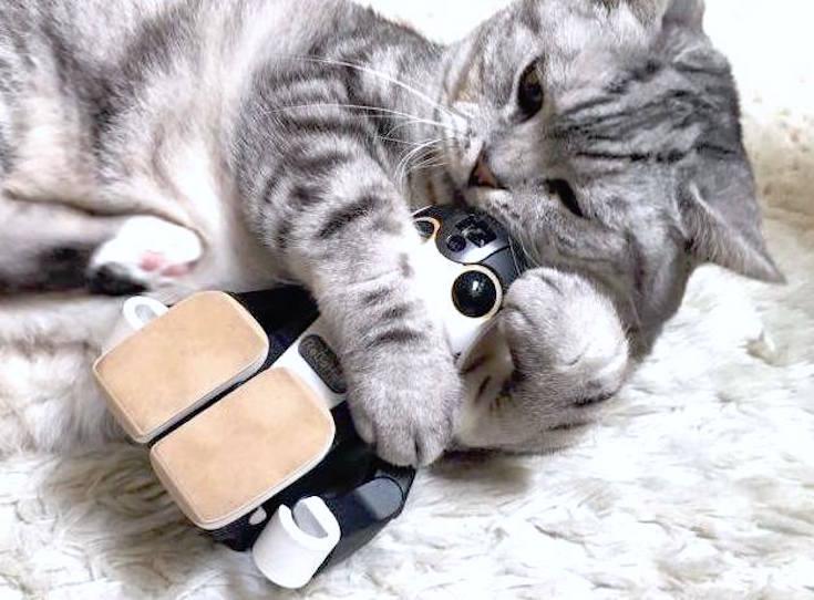 cat with robohon03