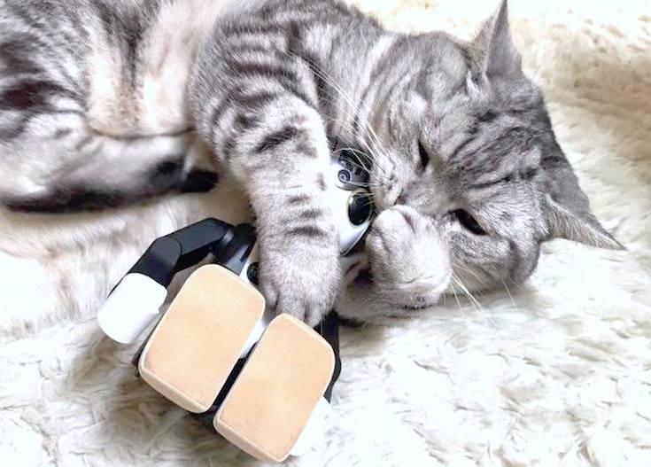 cat with robohon04
