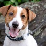 動物病院がつくった犬猫ペット用 IoT活動量計「プラスサイクル」新モデル発表 負担の少ないデザイン データ同期等のアプリ改善も