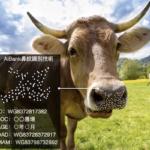 AIが和牛を個体識別する「鼻紋認証技術」AiBank.jpが開発し特許を取得 農家の負担軽減と生産性の向上を狙う