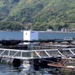 くら寿司の養殖事業をAI搭載スマート給餌機でサポート ウミトロンがKURAおさかなファームと協業 AIとIoT技術でスマート養殖